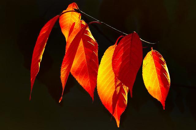 Sonbahar Yaprakları(Autumn Leaves)