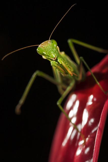 Mantis #25