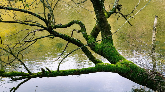 Trilho Ribeirinho  &  Praia Fluvial dos Palheiros - Zorro  -  N9015