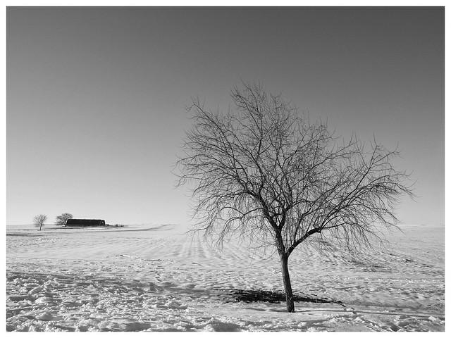 El árbol desnudo