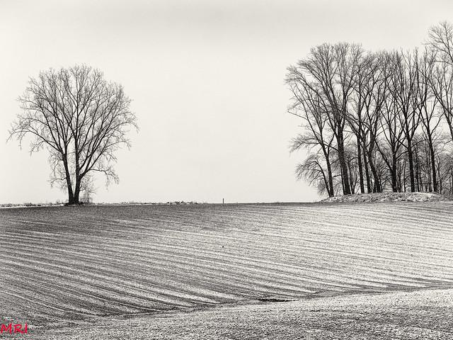 Entre champs et arbres