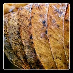 Frosen Leaf