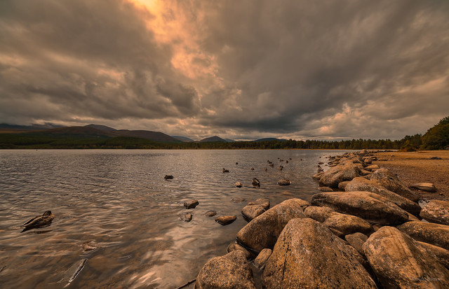 Ducks and rocks at Loch Morlich, Scotland.
