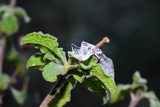 Plant and Ice