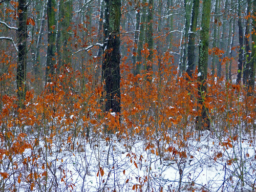 landscape ilfov românia nature colors winter snow outside forest trees