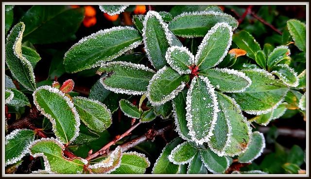 Merletti di ghiaccio (explored 19/1/21)