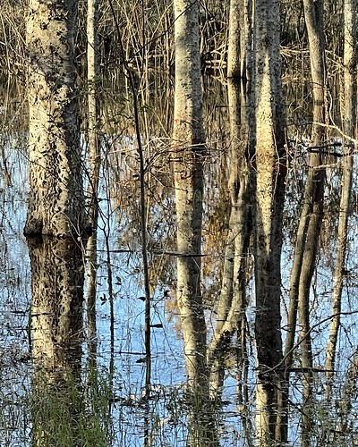 reflection trees pool water dichrome vertical formal abstract iphone12promax shadow winter haiku rhythm