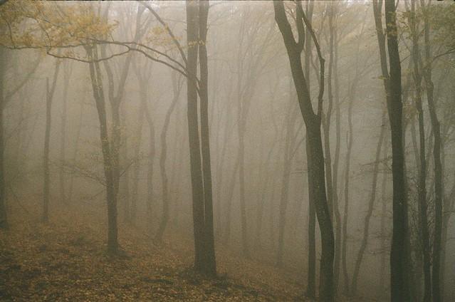 Börzsönyi ködök