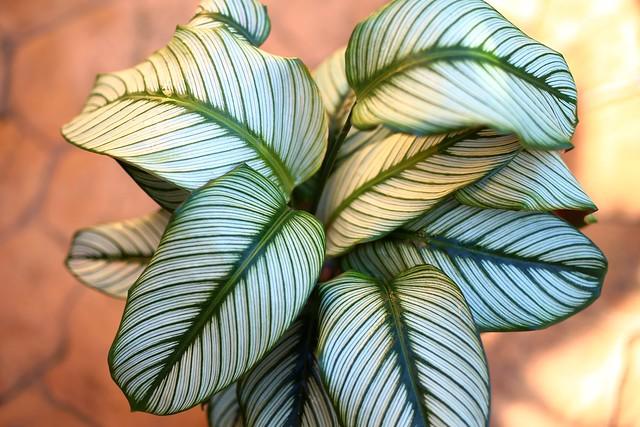 IMG_9582 Leaves