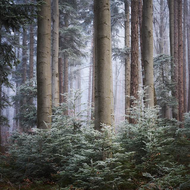 Quietness of the Woods