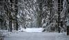 Winter view 3