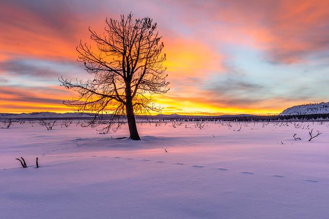 Sunrise at Mono Lake
