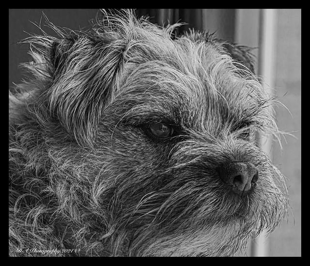 B&W Portrait of Rusty DSC_9474