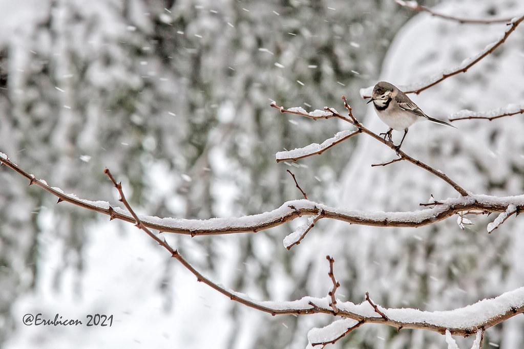 Su primera nevada