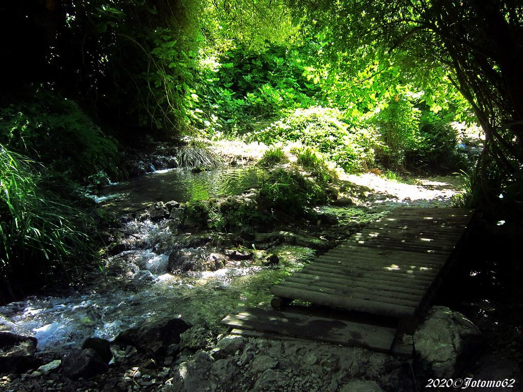 Bosque Encantado de Higueras