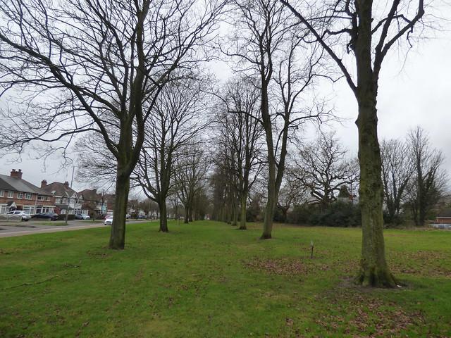 Avenue of trees - Olton Boulevard East, Acocks Green
