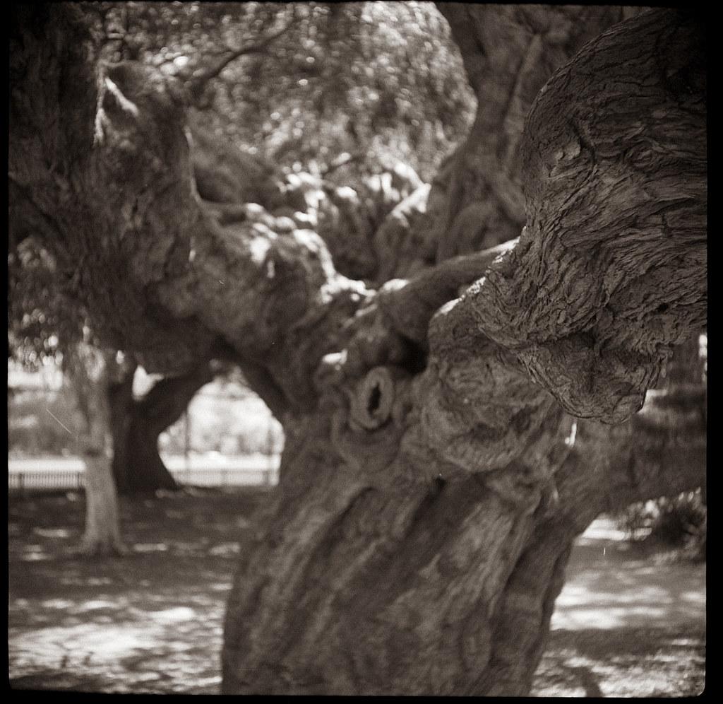 Tree 5 @ Rushcutters Bay