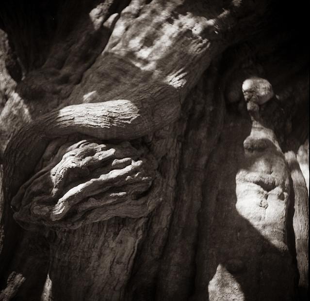Tree 1 @Rushcutters Bay
