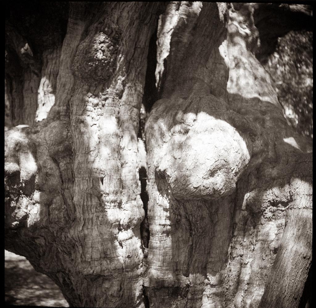 tree 3 @Rushcutters Bay