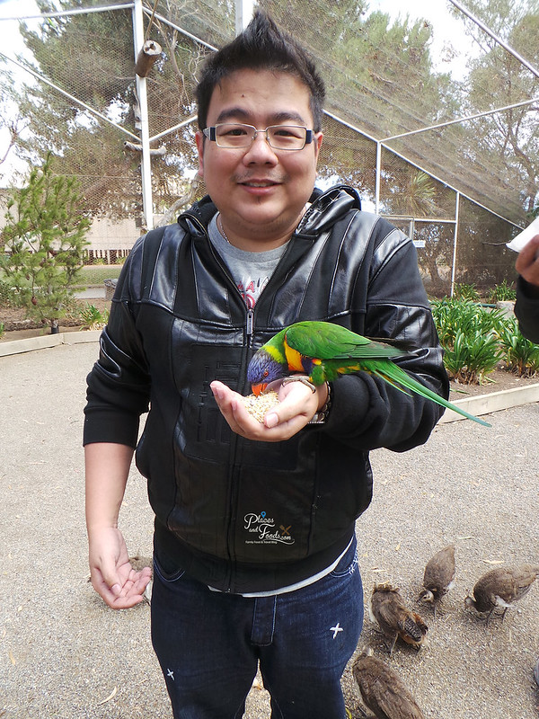 Glen Forest Tourist Park & Vineyard Australia parrot