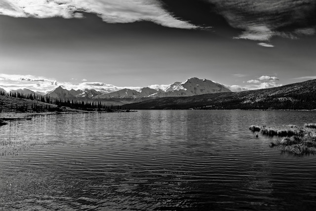 I Found Some Sweet Moments Living Day by Day in Alaska! (Black & White, Denali National Park & Preserve)