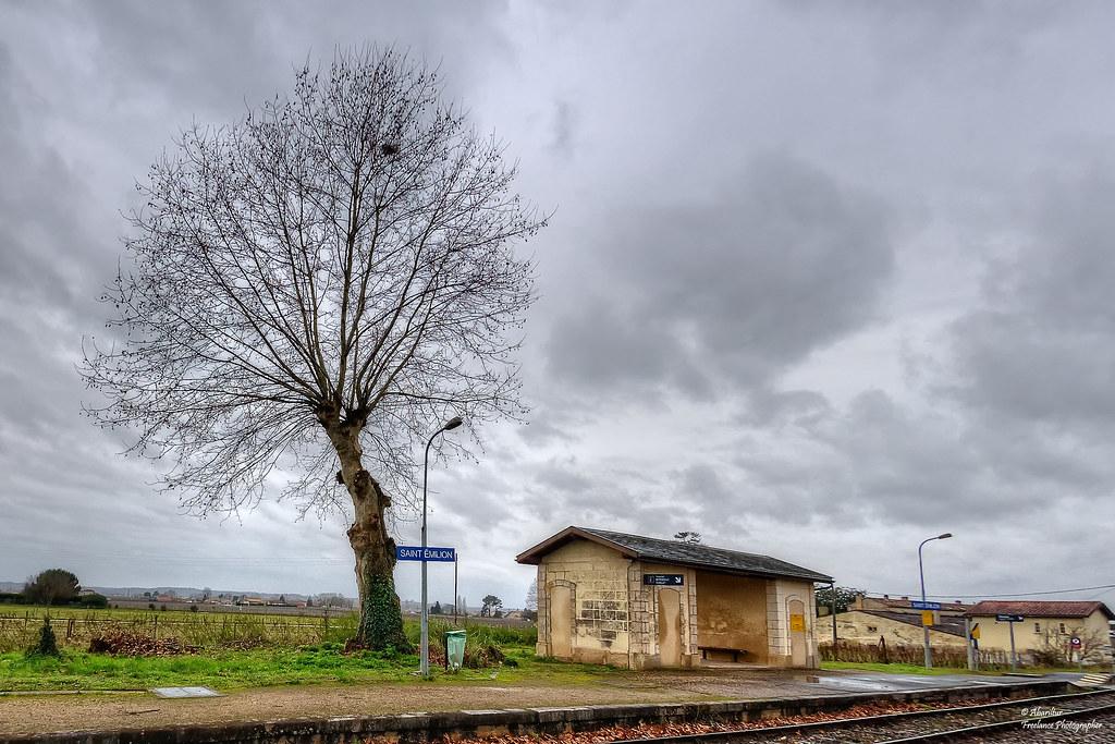 Arbre de la gare de Saint-Émilion