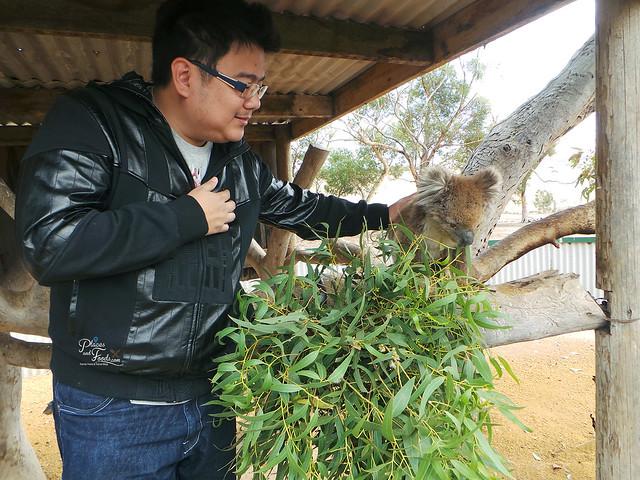 Glen Forest Tourist Park & Vineyard Australia koala petting