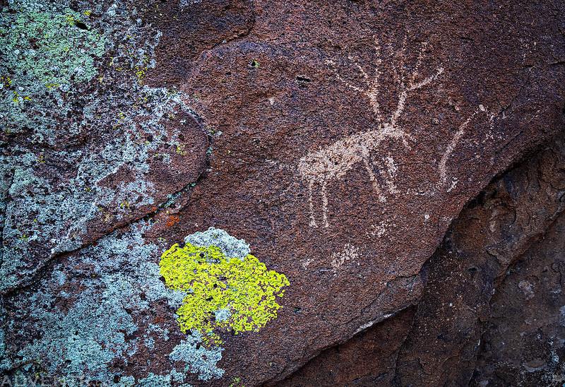 Lichen Deer