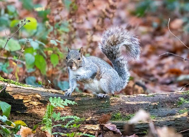 Cheeky Squirrel
