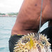 Noah with Pufferfish catch