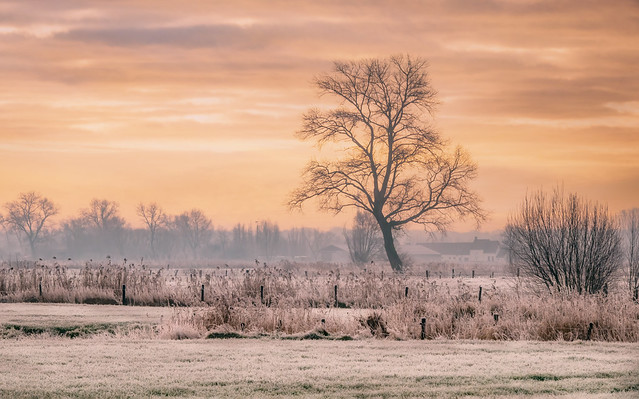 A big tree in front of the castle farm at dawn