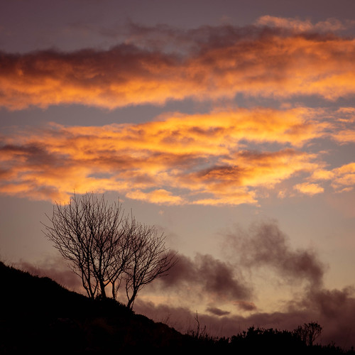 taponoth sunset sunrise tree aberdeenshire scotland rhynie landscape