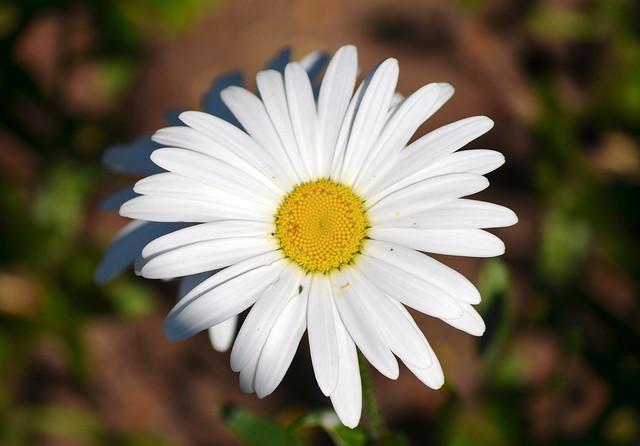 daisy 14.10.2020