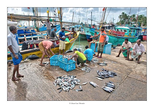 Débarque du poisson