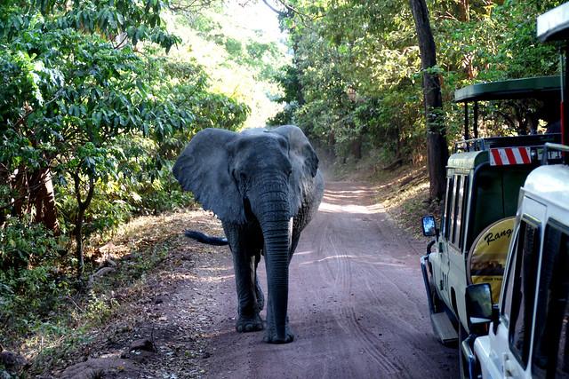 044 Lake Manyara Nationalpark