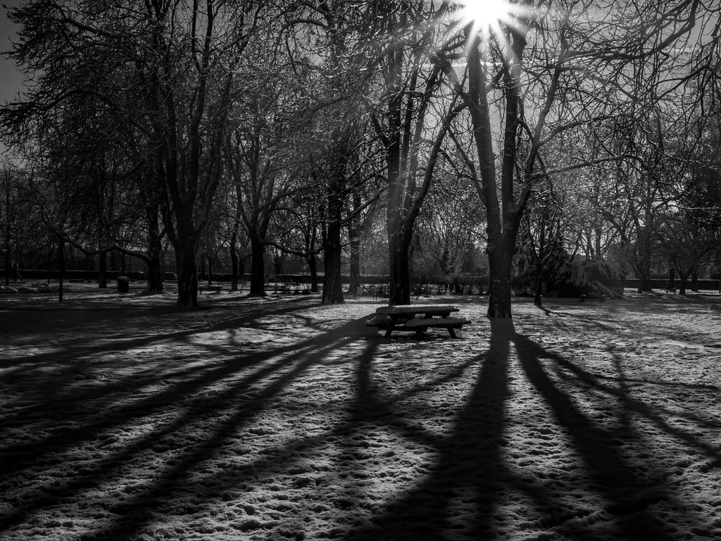Les ombres d'un soleil d'hiver... 50856031343_93fa52b21a_b