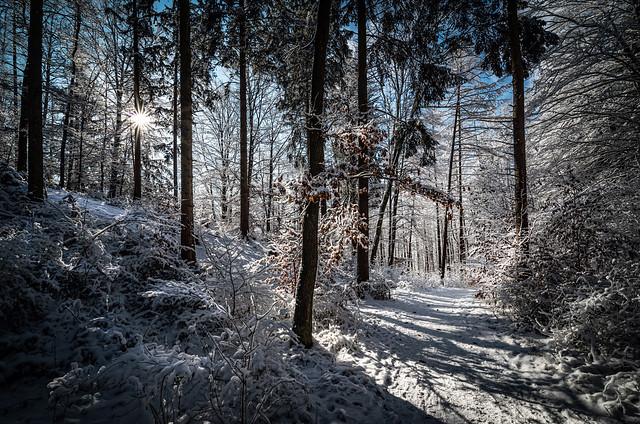 bannwald winter explored