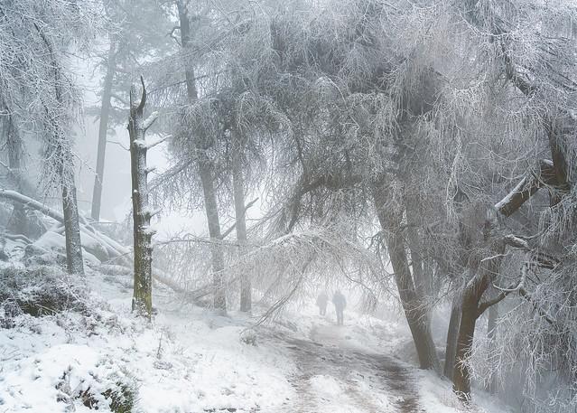 Snowy Woodland 8