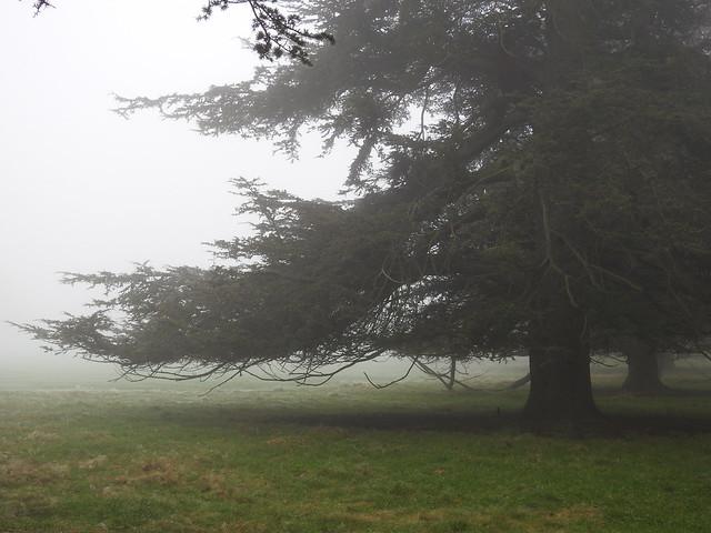 DSCN9324 A Foggy Day at Harewood House