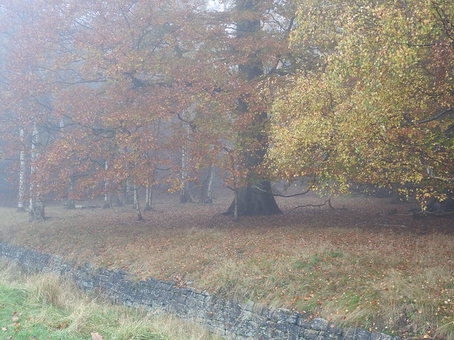 DSCN9323 A Foggy Day at Harewood House