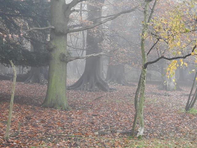 DSCN9327 A Foggy Day at Harewood House