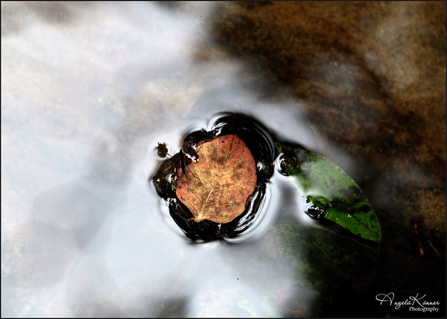 Leaf Water Surface Tension With Bugger...