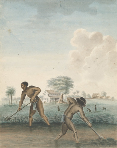 Anonymous, Enslaved Men Digging Trenches, c. 1850, Rijksmuseum, purchased with the support of the Johan Huizinga Fonds/Rijksmuseum Fonds