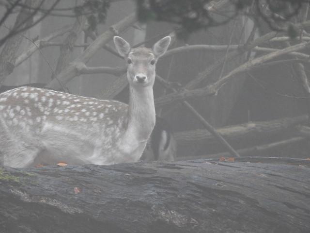 DSCN9325 A Foggy Day at Harewood House