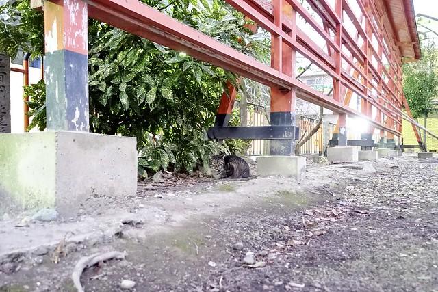 Today's Cat@2021−01−20
