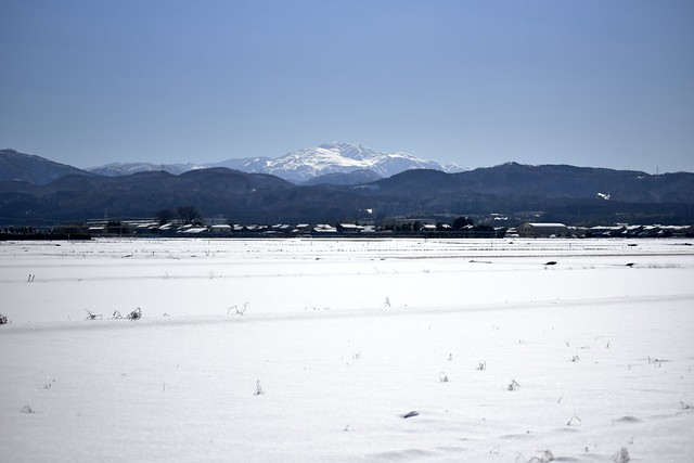 大寒の白山!