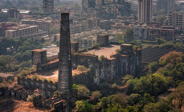 The old plant, Mumbai