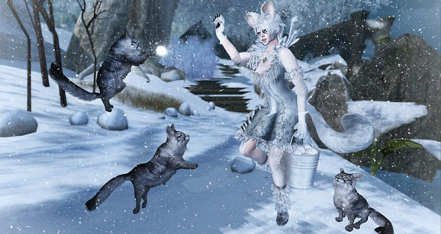 Snowball fight with the kitties!