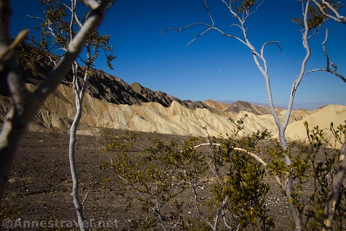 Looking through a creosote bush up at the head of 20 Mule Team Canyon, Death Valley National Park, California