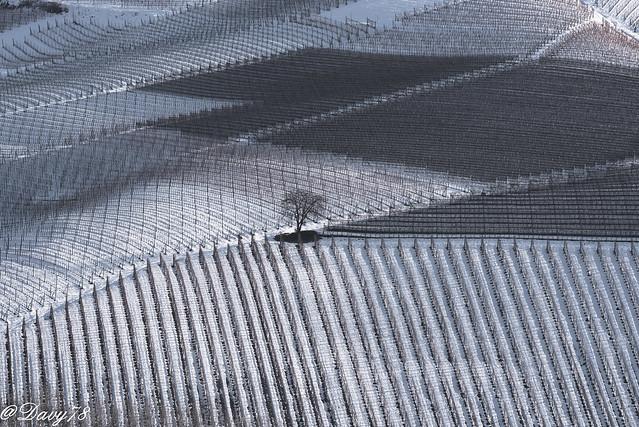 Isolamento tra i vigneti invernali delle langhe